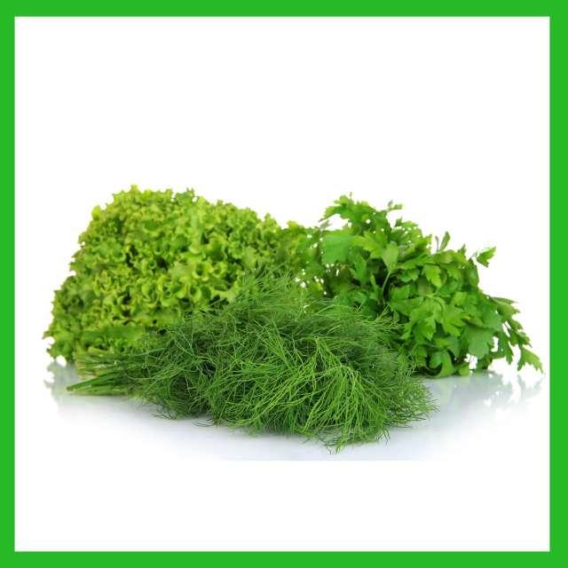 ירק ועשבי תיבול